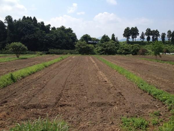 【吉田里山研究所 PaPaの畑】土台はオーガニックフィールド!世の中をバラ色に!