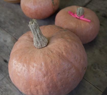 里川かぼちゃ 常陸太田市 在来作物